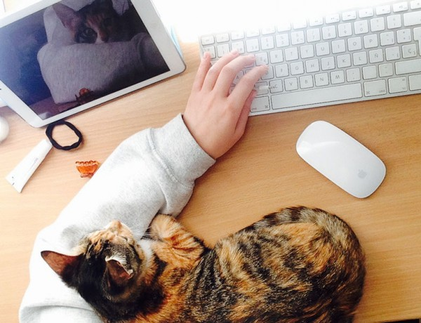 A person online dating with a cat in front of their computer.