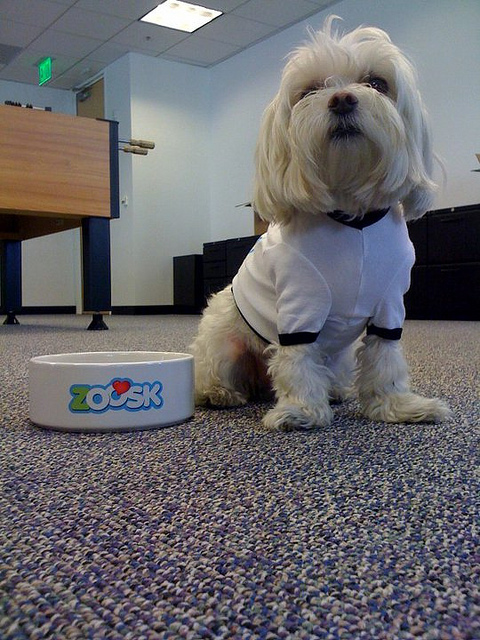 Zoosk Dog Friendly