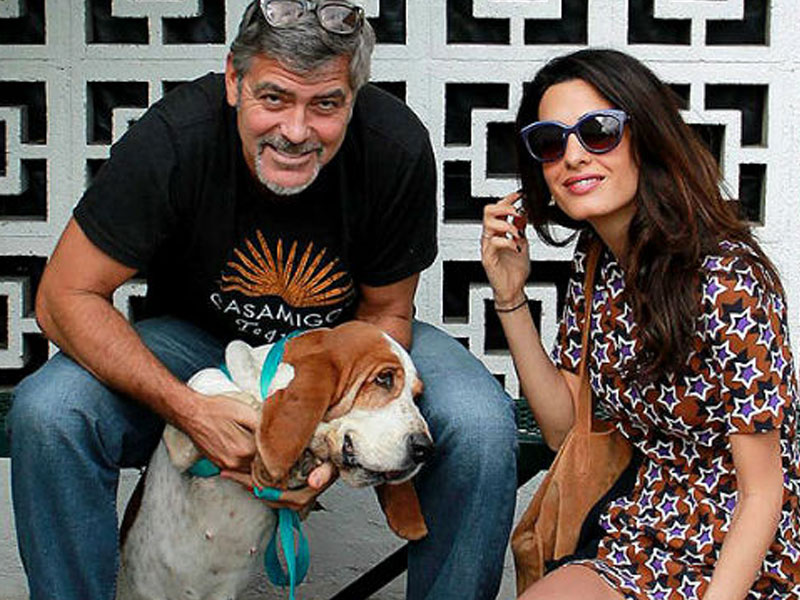 George and Amal Clooney Welcome a New Addition