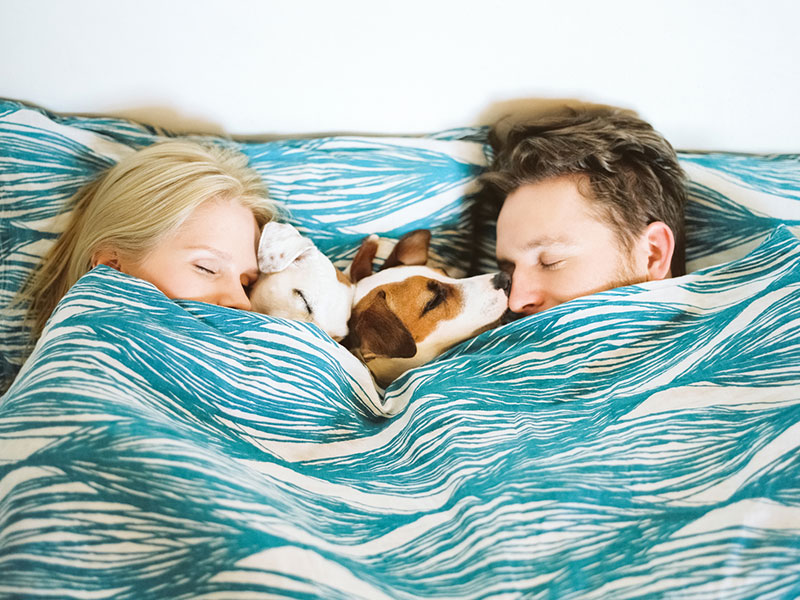 Two people snuggling in bed with two puppies during cuffing season.
