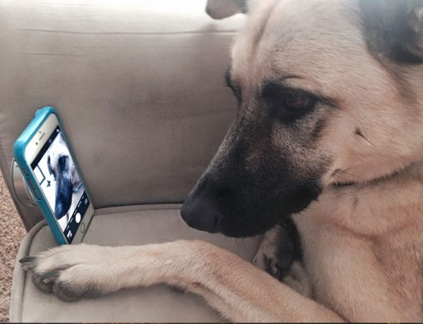 A dog taking a selfie of himself for an online dating site.