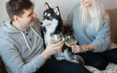 A couple who used these 1-year anniversary date ideas, drinking champagne and celebrating with their dog.